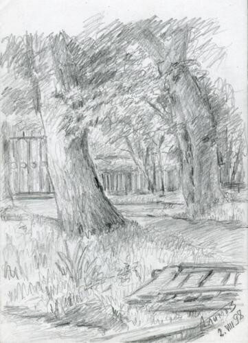 1998. Деревья у пруда биостанции. Рыбачий, карандаш