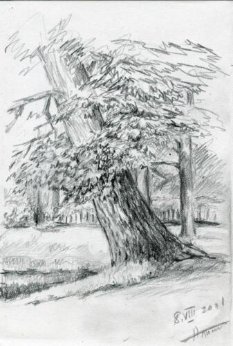 2001. Дерево, карандаш