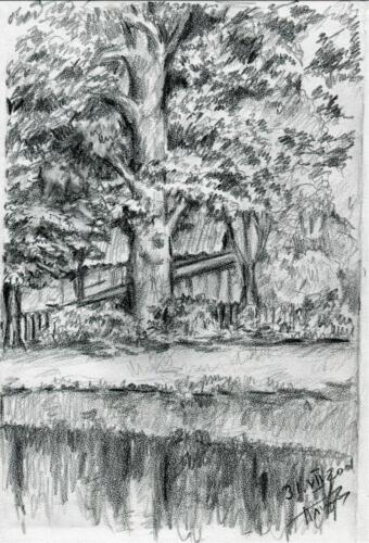 2001. Дуб, карандаш